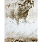 Африканский буйвол