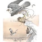 Арабский сокольник с балобаном