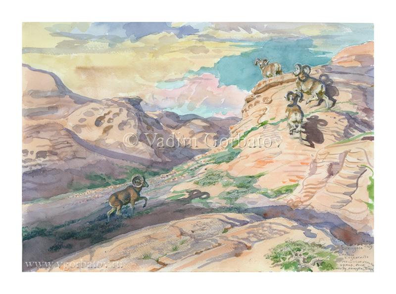 Архары. Бектауата. Казахстан