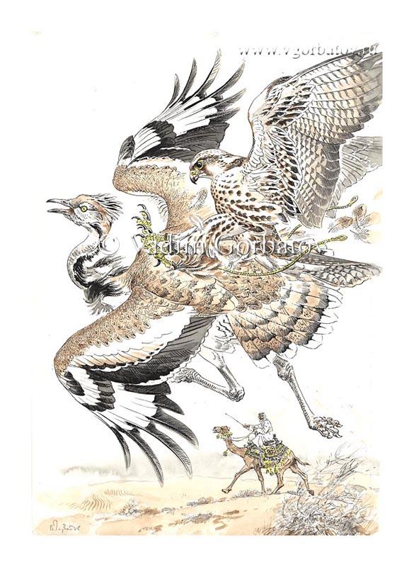 Соколиная охота: с балобаном на хубару. Falconry: saker falcon and houbara bustard