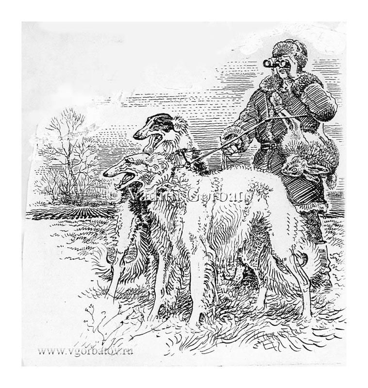 С русскими псовыми борзыми. The Borzoi (Russian hunting sighthound)