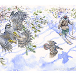 Goshawk and capercaillie