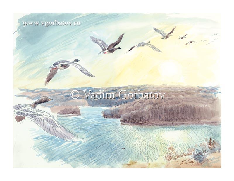 Taiga Bean Goose. Autumn flight Гуси над Гижозером. Карелия