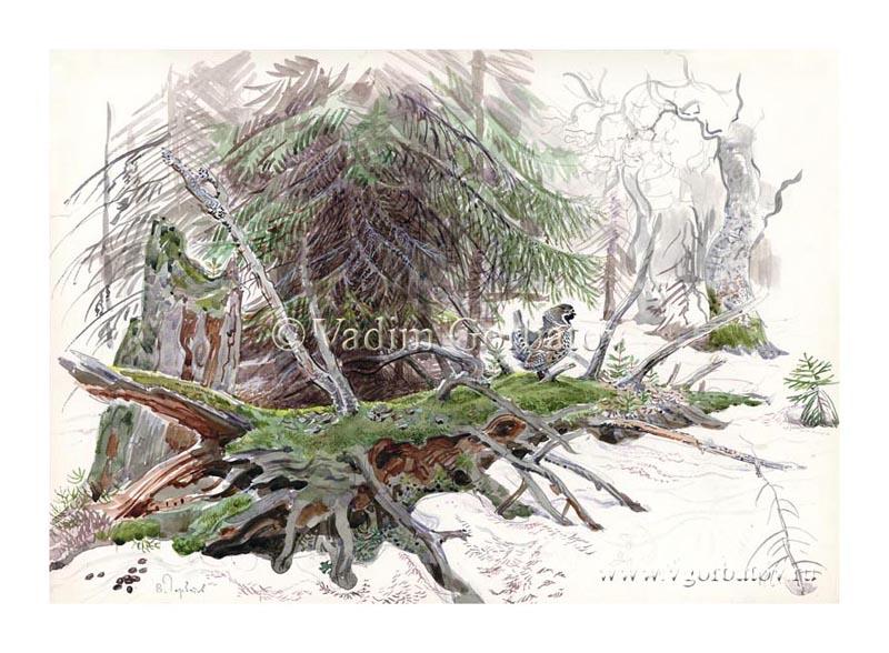 Лесной петушок