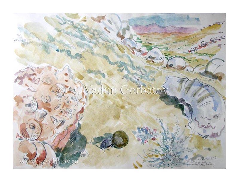 Аммониты в обломках шарообразных конкреций. Мангышлак