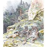 На скалах Заонежья