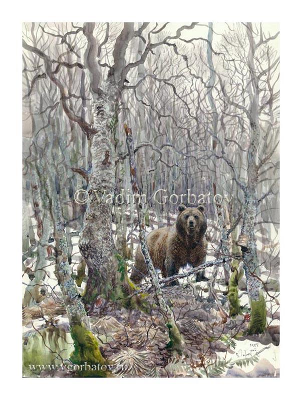 The brown bear Meeting in alder Встреча в ольшаннике