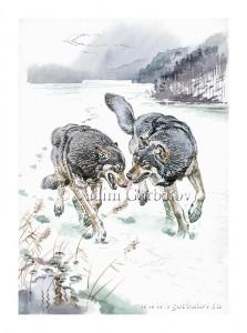 Волки на озере