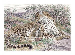 Леопард с котенком. Батхыз