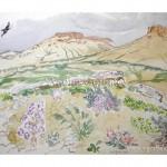 Цветы пустыни. Последняя ступень западного чинка Устюрта