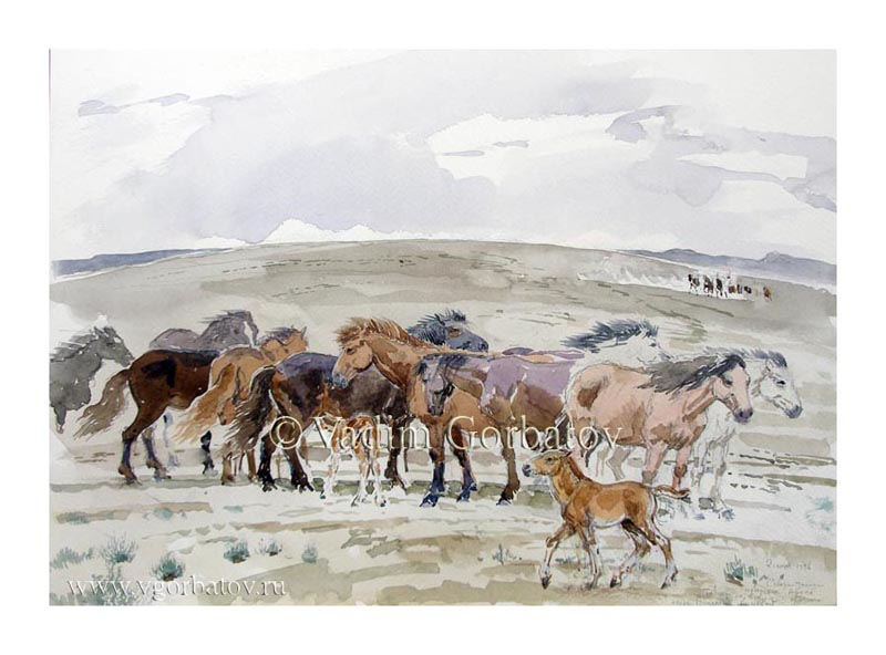 Табун на водопое. Побережье Арала. A herd of horses at a watering hole. The coast of the Aral Sea. Kazakhstan