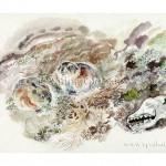 Сибирские лемминги. Тиманская тундра