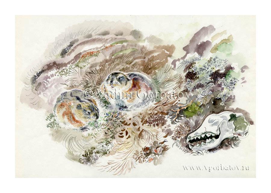 Siberian lemmings. Сибирские лемминги. Тиманская тундра