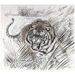 Потревоженный тигр