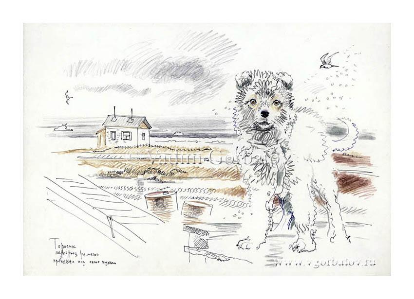 Puppy. Polar Weather Station Торосик. Полярная станция, Карское побережье