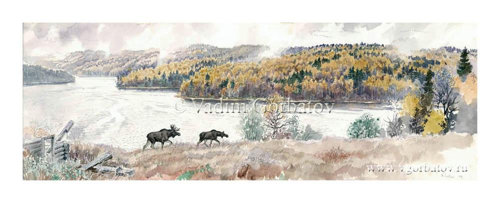 Time for moose weddings September Karelia Время лосиных свадеб Сентябрь Гижозеро