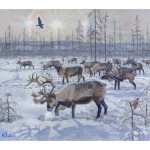 Reindeer. Cеверные олени.