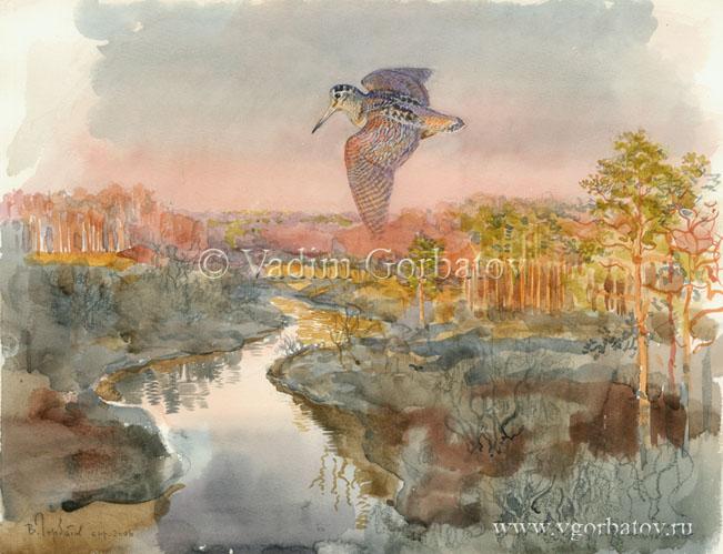 Вальдшнеп над речкой Дрезна