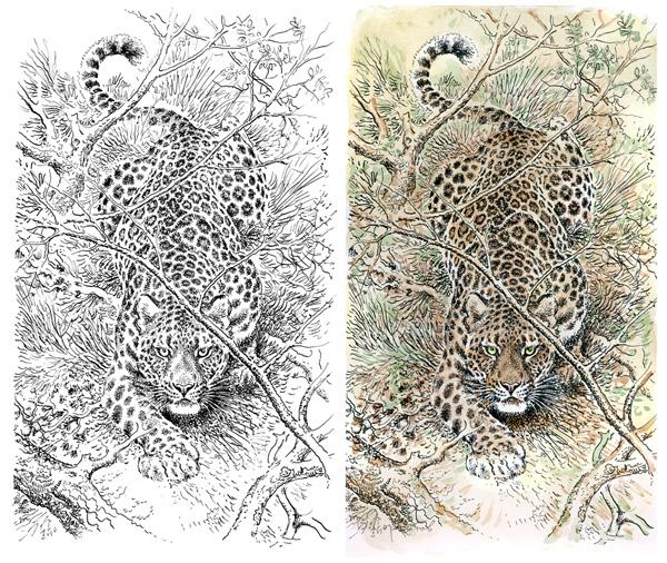 leopard news
