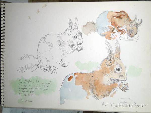 squirrel 5