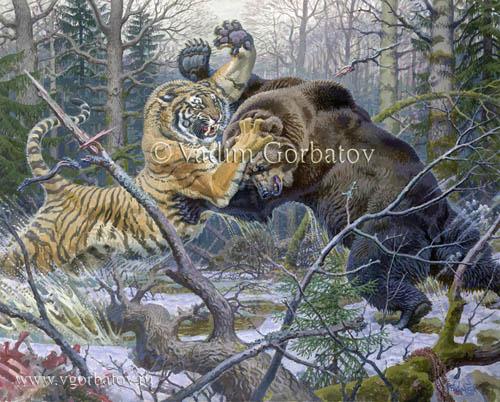 Tiger versus lion  Wikipedia